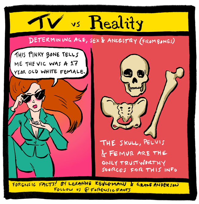 Tv Vs Reality Determining Agesexancestry From Bones